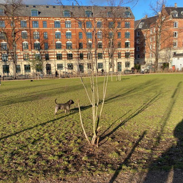Mein Lieblingsort in Nørrebro ist der Hundepark.