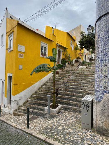 Eine gelbleuchtende Hausfassade in Lissabon, daneben wächst eine grüne Palme zwischen den Pflastersteinen.