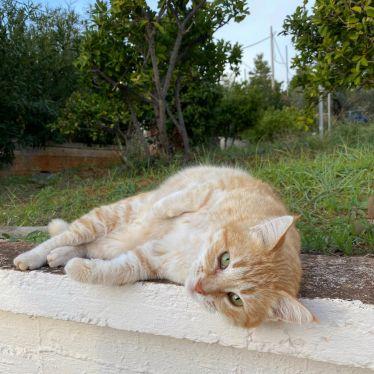 Mein letztes Katzenfoto ist schon viel zu lange her. 😁 Bei einem Spaziergang…