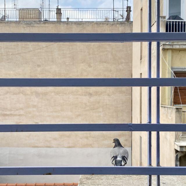 Auf dem Vorsprung des Balkons sitzt eine Taube, die farblich genau mit dem sich dahinter befindlichen Haus deckt.