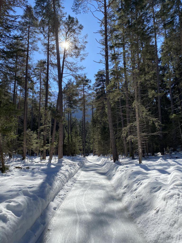 Im Vordergrund ein vereister Waldweg, drumherum Wald und Sonnenschein