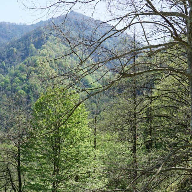 Ausblick Wald