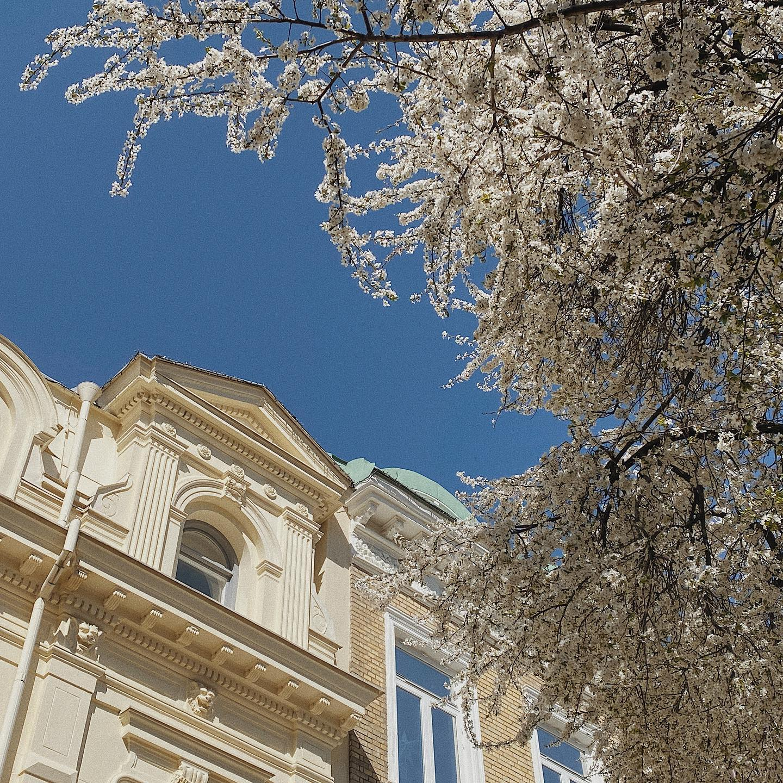 Spring has sprung in Gothenburg🌸…