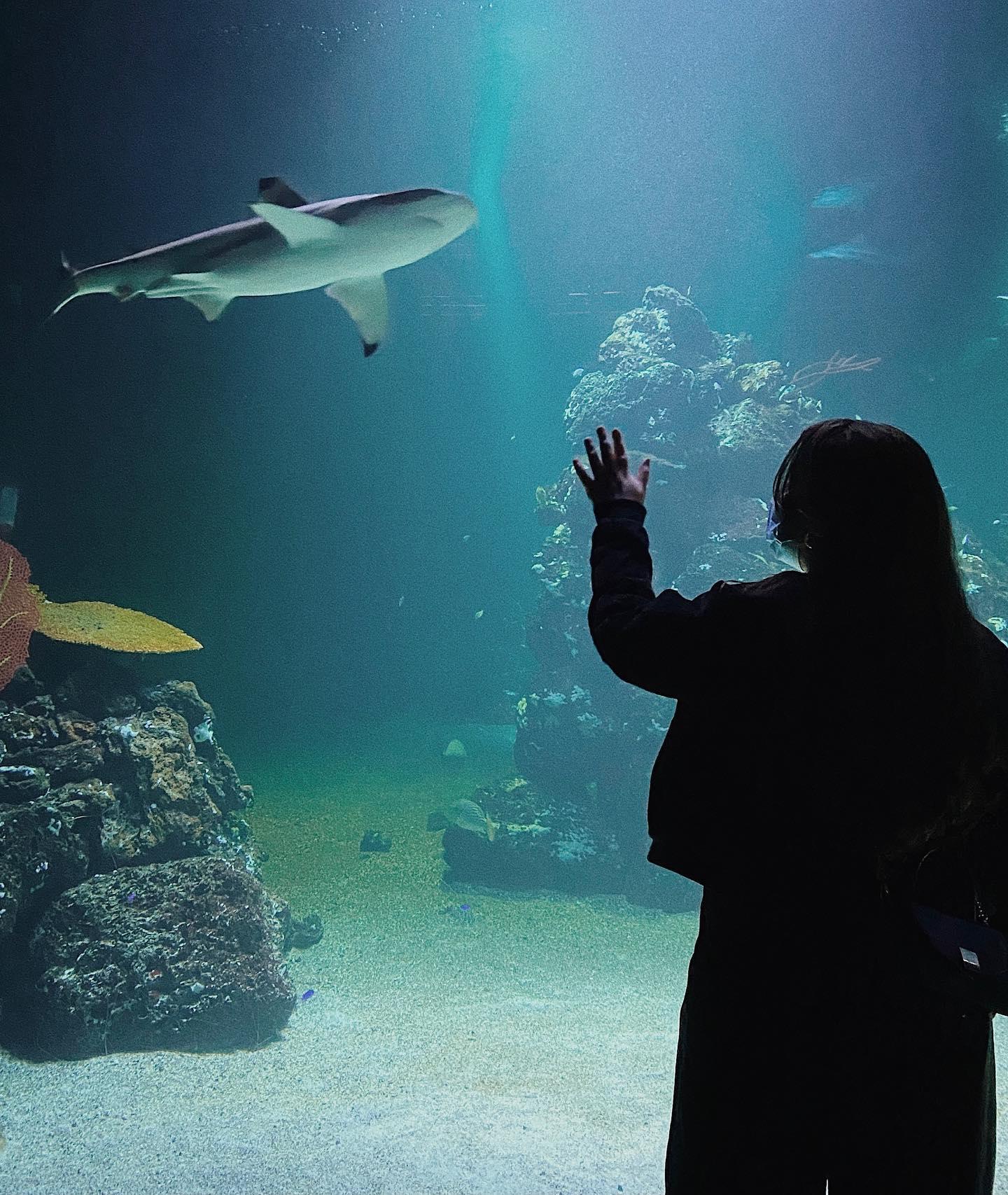 Das Universeum ist ein interaktives Museum mitten in Göteborg. Hier kann man…