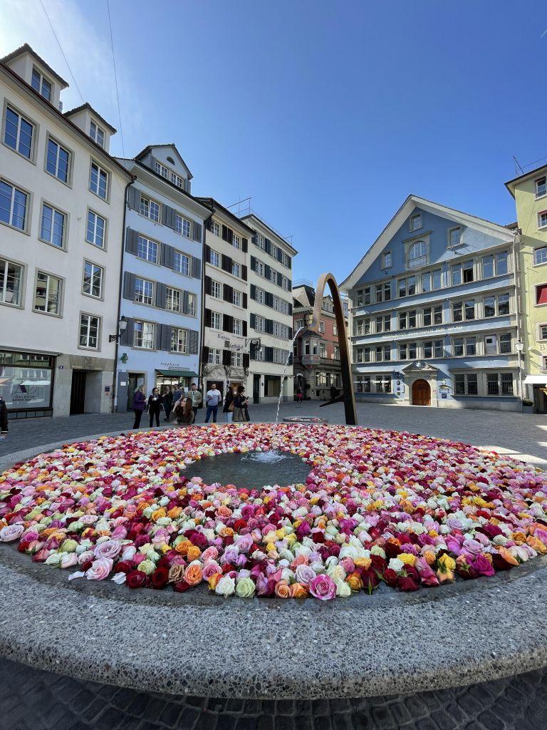Mit Rosen befüllter Trinkwasserbrunnen in der zürcher Innenstadt, dahinter Häuser