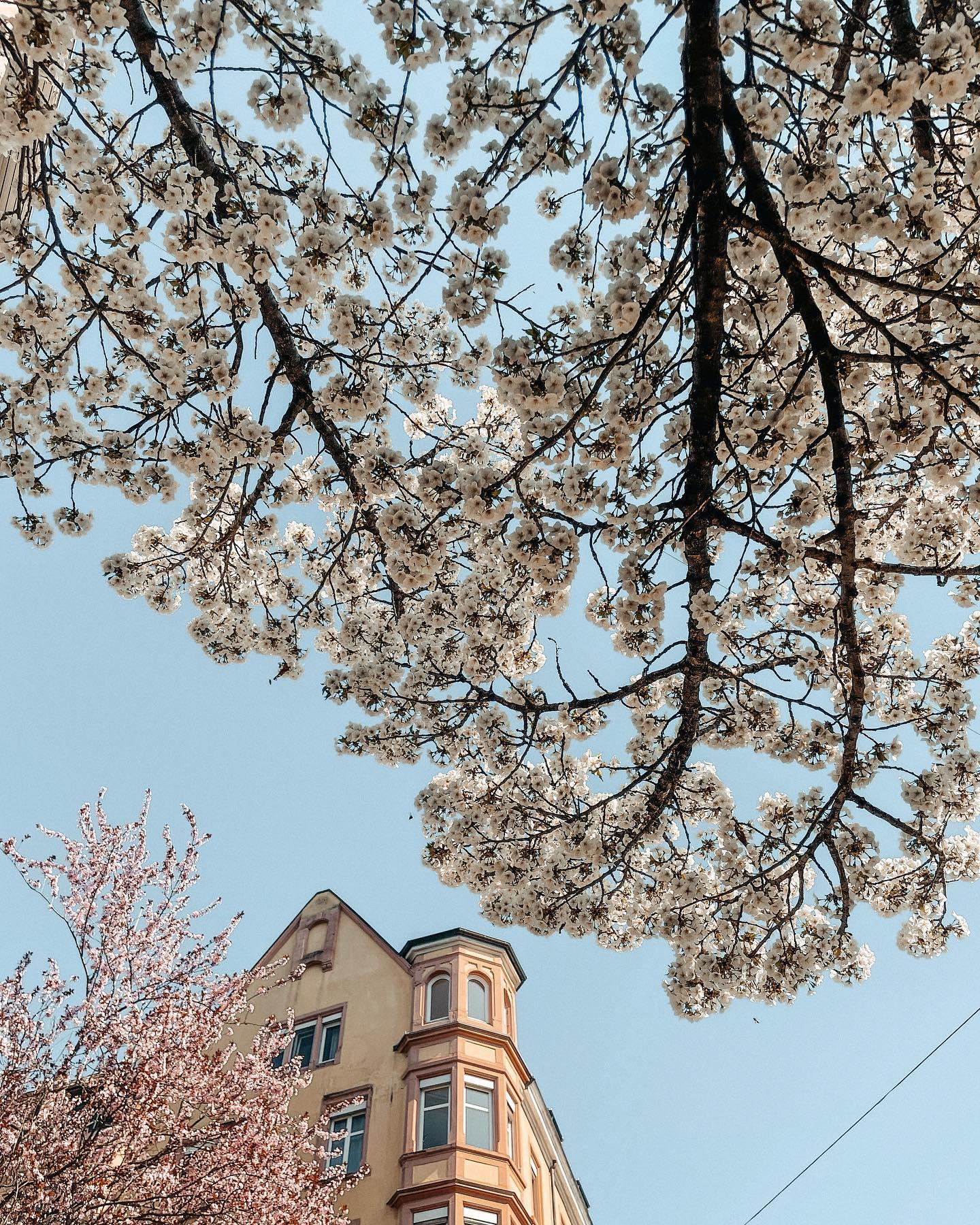 Der Frühling ist in Zürich angekommen 😍🌸…