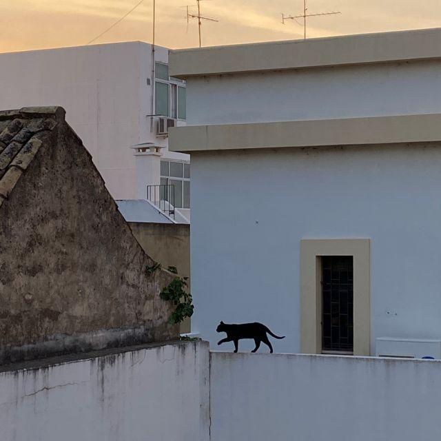 Eine schwarze Katze läuft über eine weiße Mauer.