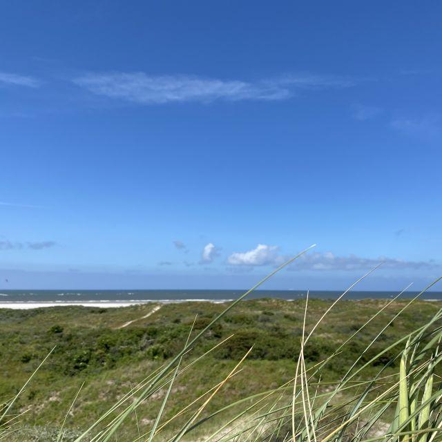 Man sieht das Meer. Man erkennt Grad im Vordergrund und Strand.