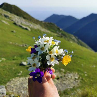 Blumenstrauß, Berge