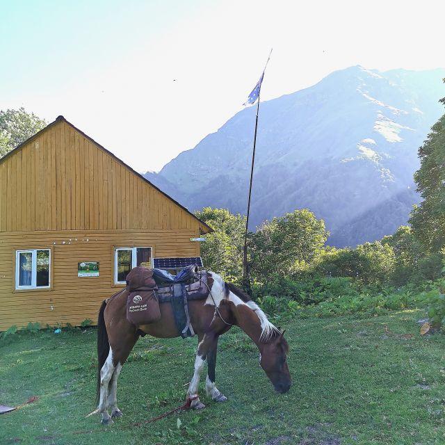 Pferd, Touristenunterkunft, Berge