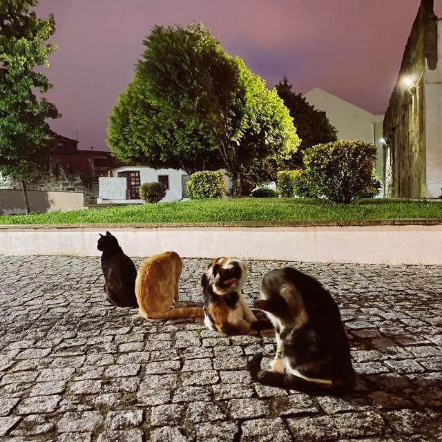 vier Katzen sitzen in der Reihe und putzen sich.