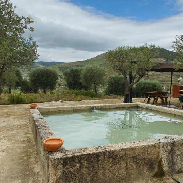Ein Brunnen steht auf dem Platz des Weinguts, im Hintergrund sind Olivenbäume und Weinreben.