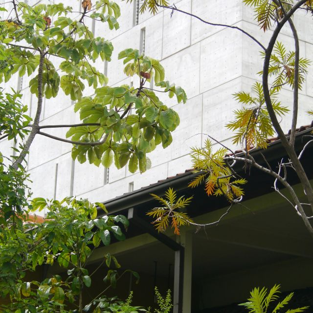 Vor einer Betonfassade wachsen tropische Pflanzen