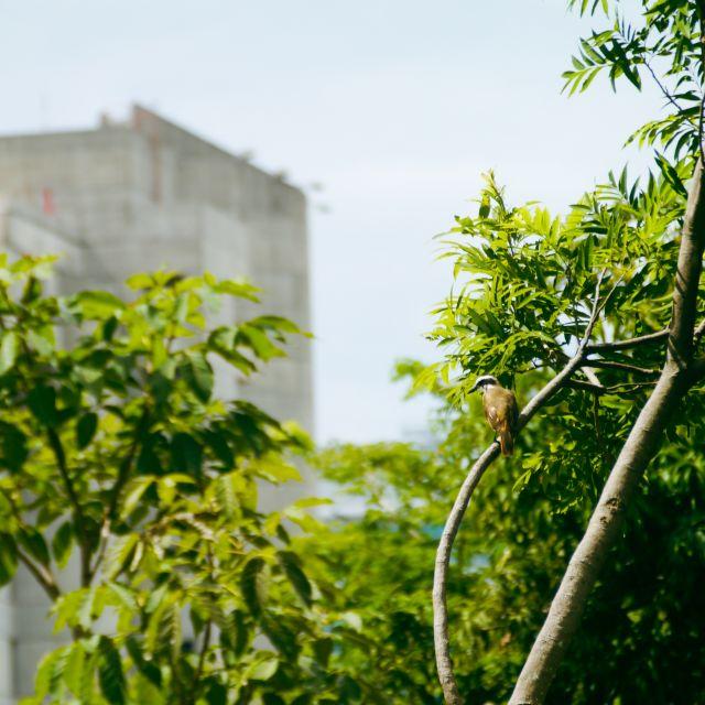 Ein brauner, unauffälliger Vogel sitzt auf einem kahlen Baumast.