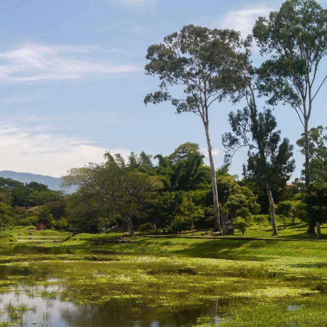 Idyllischer Blick auf den See mit Bäumen am Ufer.