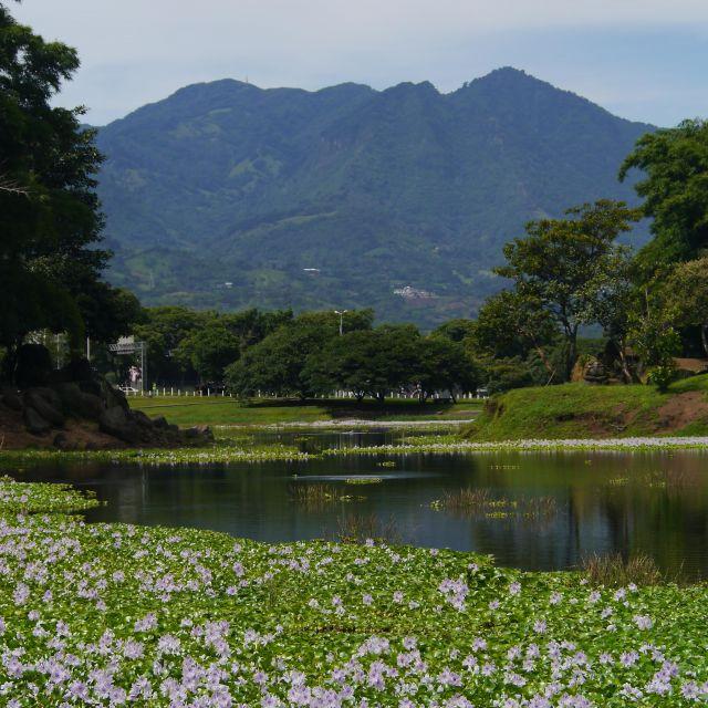 Blick auf den See mit unzähligen helllila blühenden Wasserpflanzen