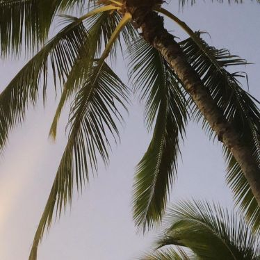 Leben im Paradies 🌴…