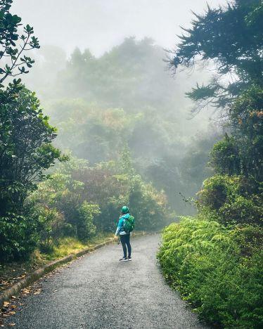 Ein Wald in den Wolken ☁️ ⛰🌳…