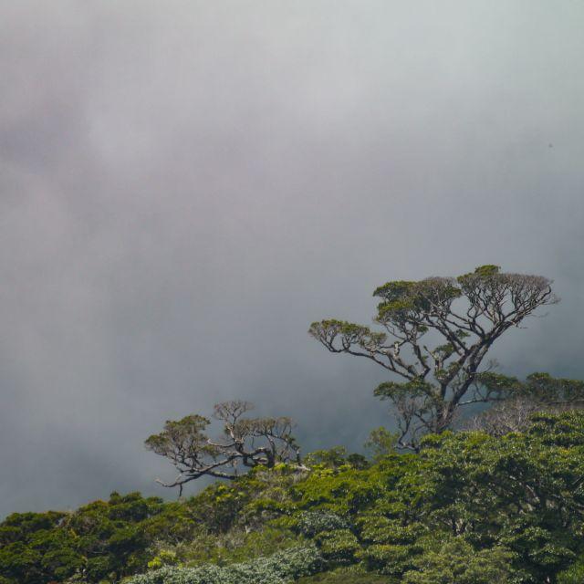 Vor einer Wolkenwand sind zwei Bäume zu sehen.