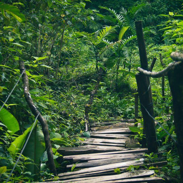 Inmitten grüner tropischer Pflanzen führt ein Weg aus Holzlatten.