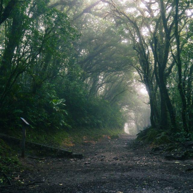 Ein Weg durch einen üppig grünen Wald, dessen Ende von Nebel verdeckt wird