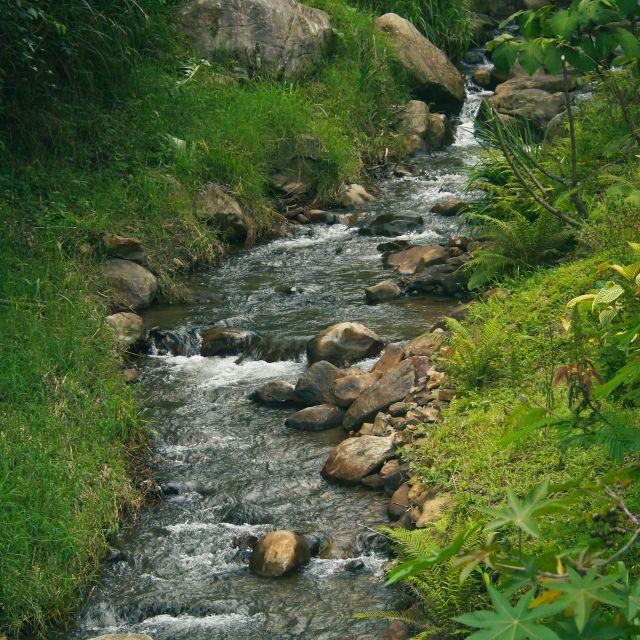 Durch grüne Wiese fließt ein Bach mit vielen großen Felsen im Bachbett.