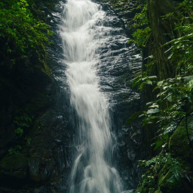 Wasser fällt eine dunkle Steinwand hinunter, nebendran wachsen üppige Grünpflanzen