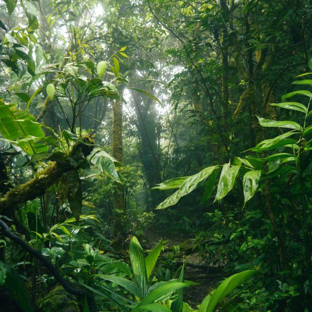 Blick in einen nebligen Regenwald, im Vordergrund sind große exotische Blätter zusehen.