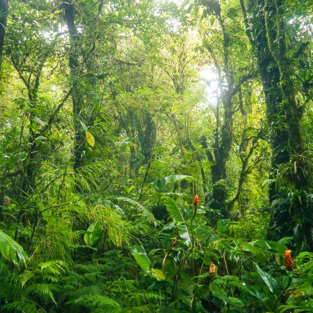 In einem unübersichtlichen grünen Regenwald leuchten orangene Tupfer auf.