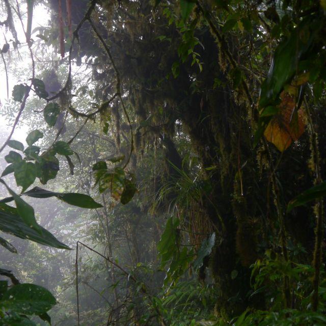 Ein Baum beherbert viele Arten von Epiphyten.