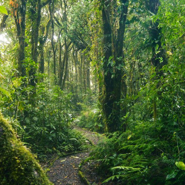 Ein Weg schlängelt sich durch den Regenwald, und im Vordergrund ist ein moosbewachsener Baumstamm zu sehen,