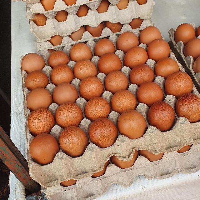 25 Eier in einem Karton